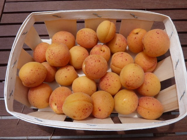 Travelling apricots
