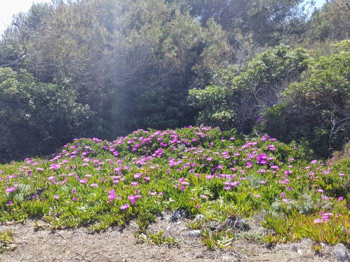 flowers on the coast