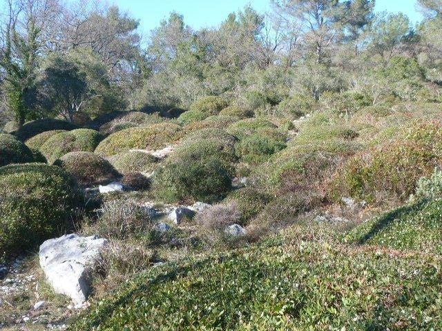 Camp Tracier Roquefort les Pins