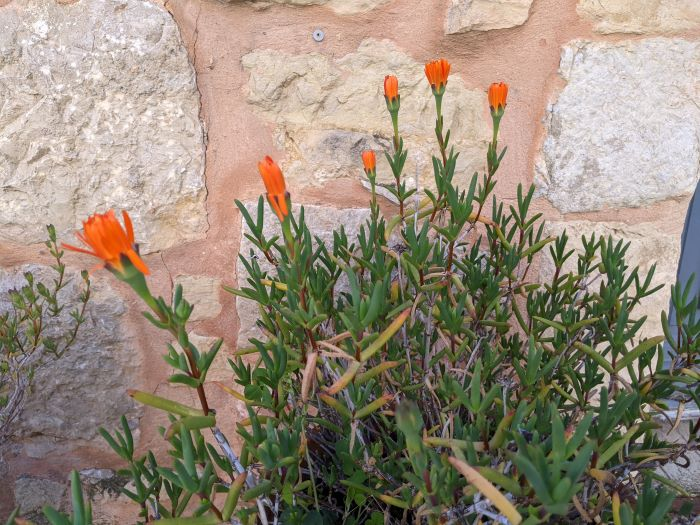 orange flowers against stone wall