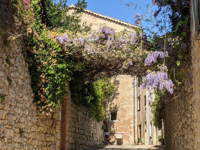 wisteria in Châteauneuf street