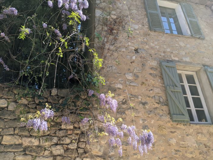 wisteria and shuttered windows
