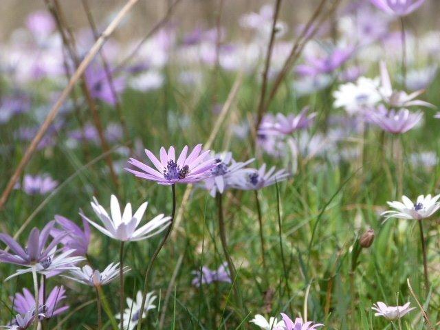 Spring garden – a photo essay