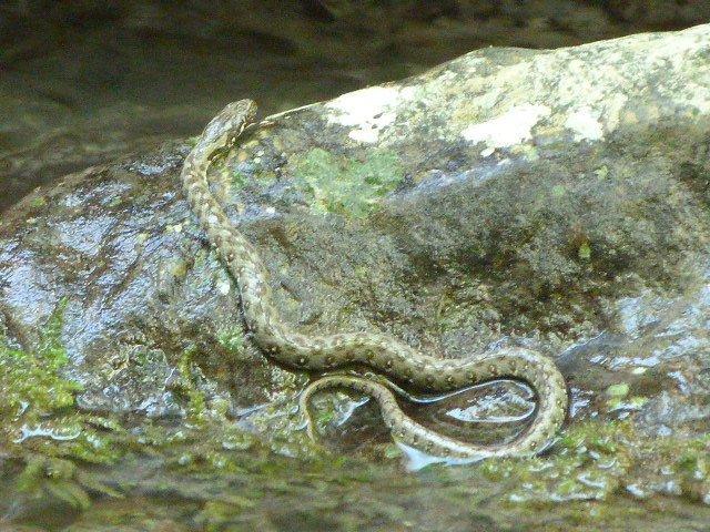 snake at riou
