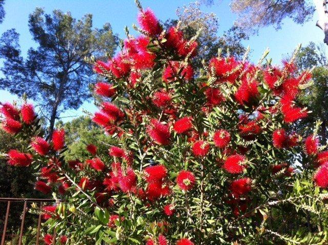 Summer Garden: Flowers, Weeds And Bees