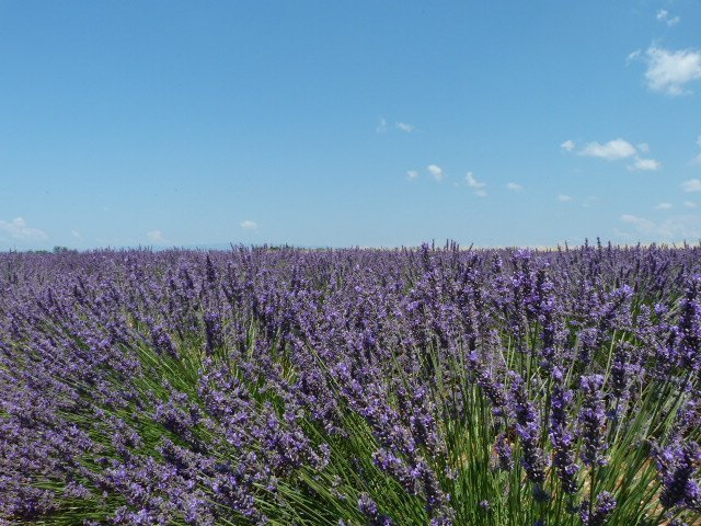lavender and sky