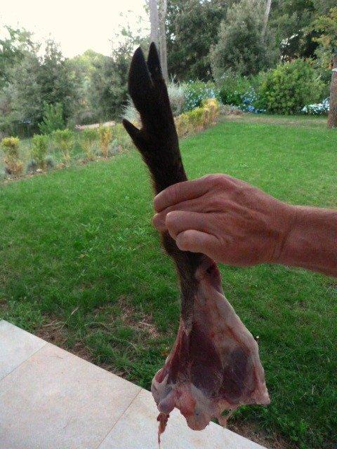 wild boar leg