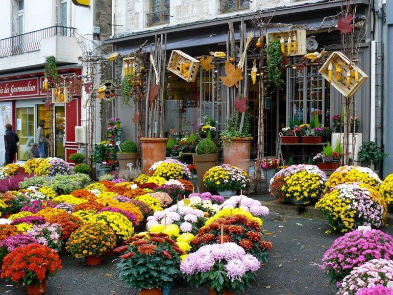 chrysanthemum shop