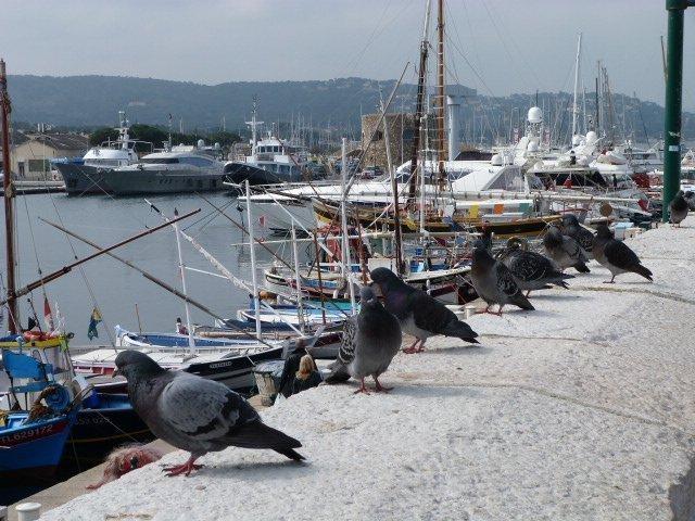 St Tropez 12