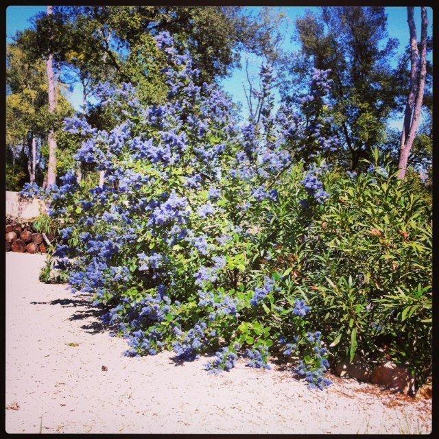 Lou Messugo garden on Instagram