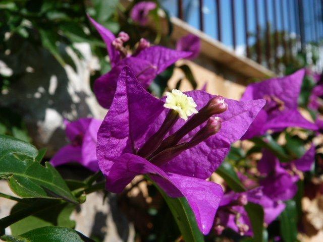 garden Lou Messugo 14