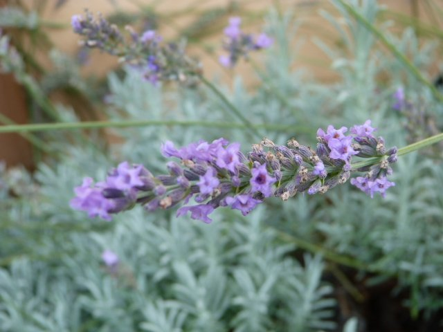 garden Lou Messugo 25