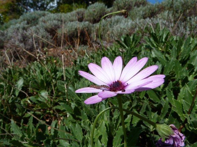 garden Lou Messugo 29