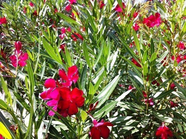 garden Lou Messugo 32