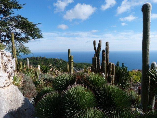 exotic gardens of Eze cacti | Lou Messugo