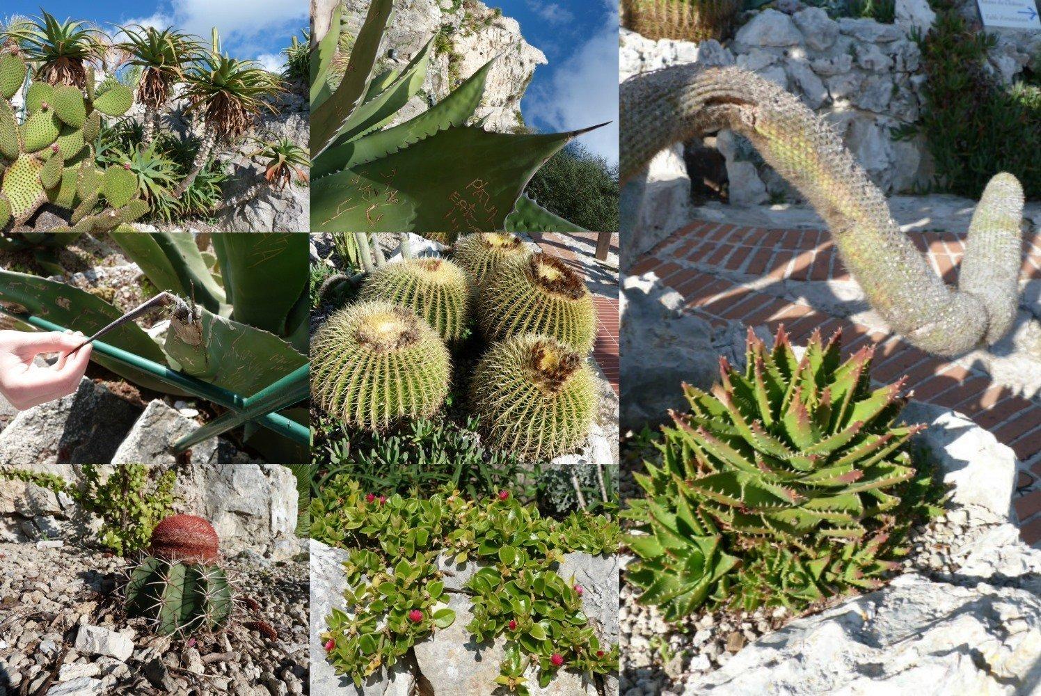 cacti Eze jardin exotique