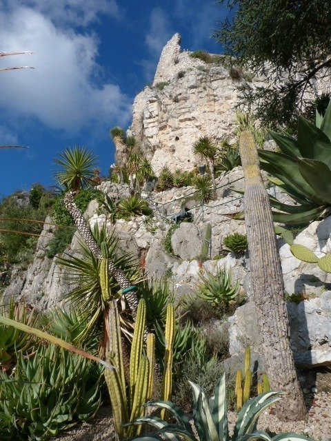 cactus and mountain view in Eze French Riviera