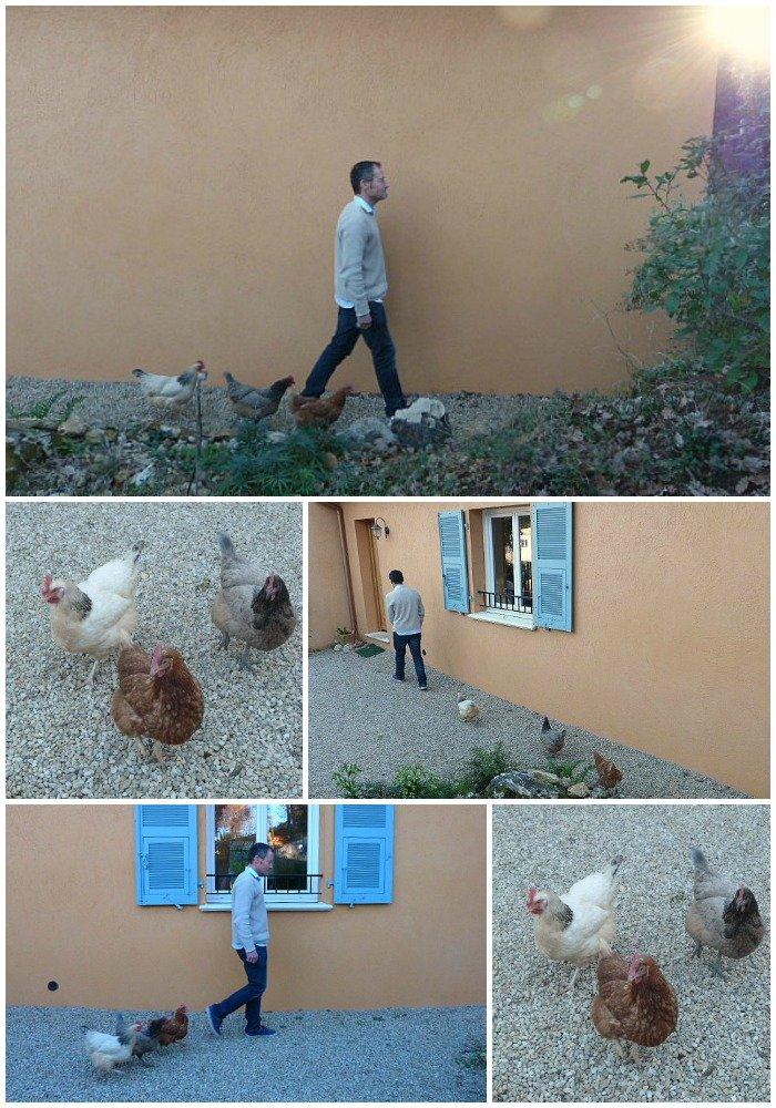 chicken followers
