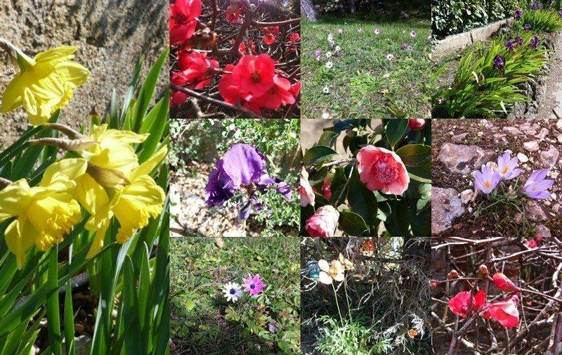 spring flowers Roquefort les Pins