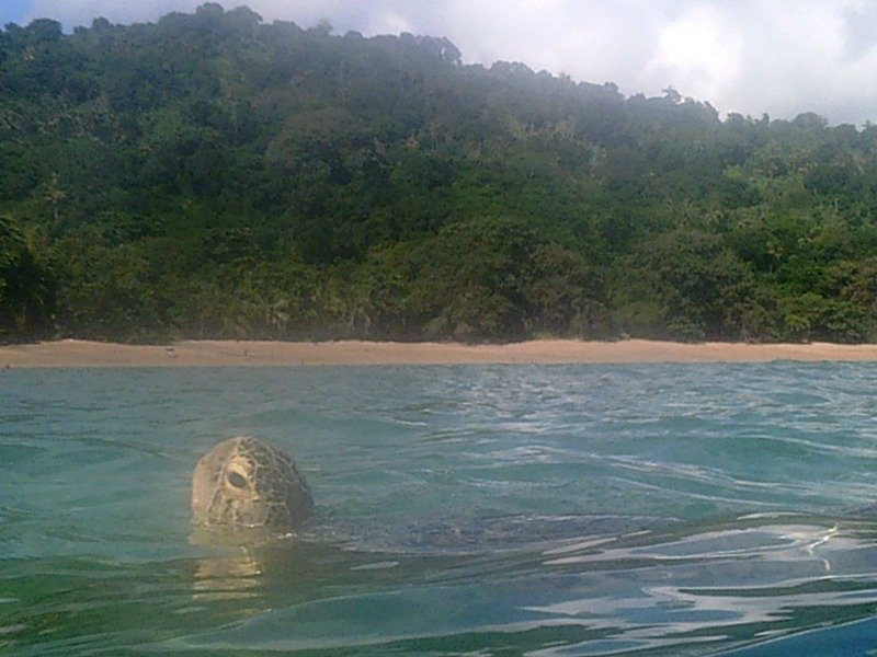 turtle coming up for air in Mayotte