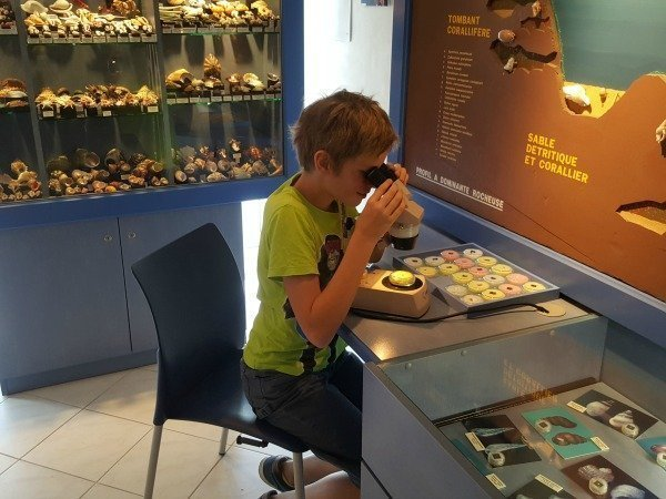 interactive exhibits at shell museum