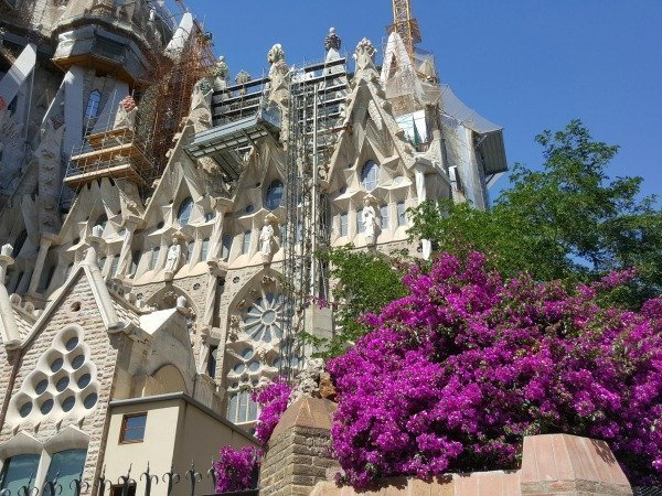 Sagrada Familia and bougainvillea