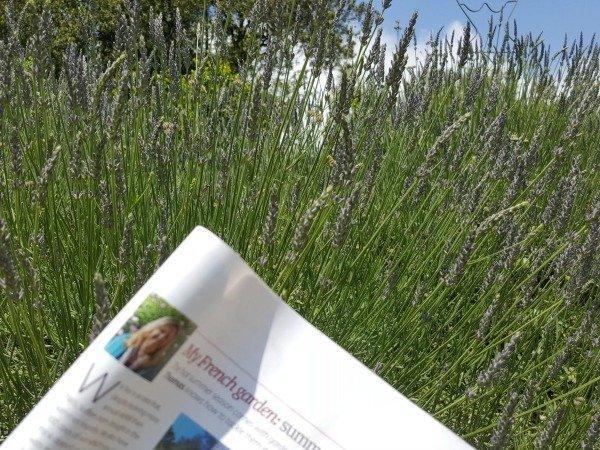 lavender and magazine