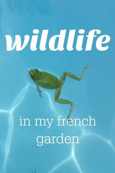 wildlife in my garden