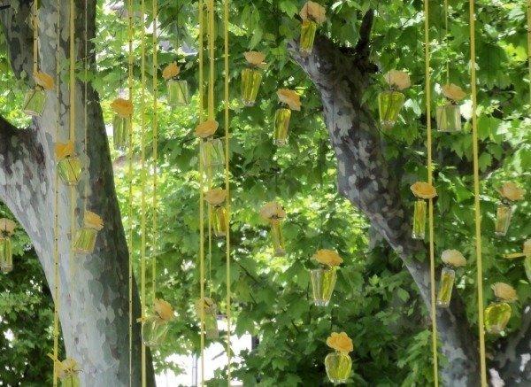 perfume tree Grasse expoRose