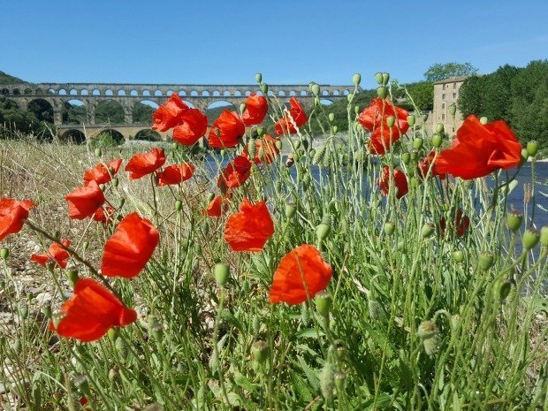 Poppies at the Pont du Gard