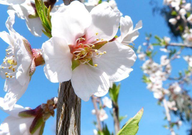 Lou Messugo Garden blossom closeup