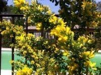 spring riviera garden | Lou Messugo