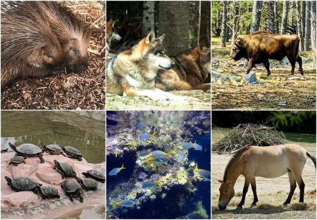 Wildlife Reserves, Animal Parks and Zoos on the Côte d'Azur