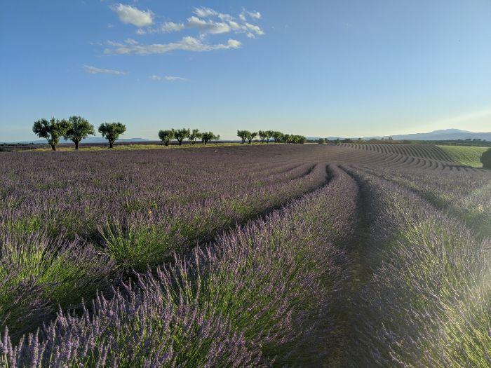 lavender Valensol plateau | Lou Messugo