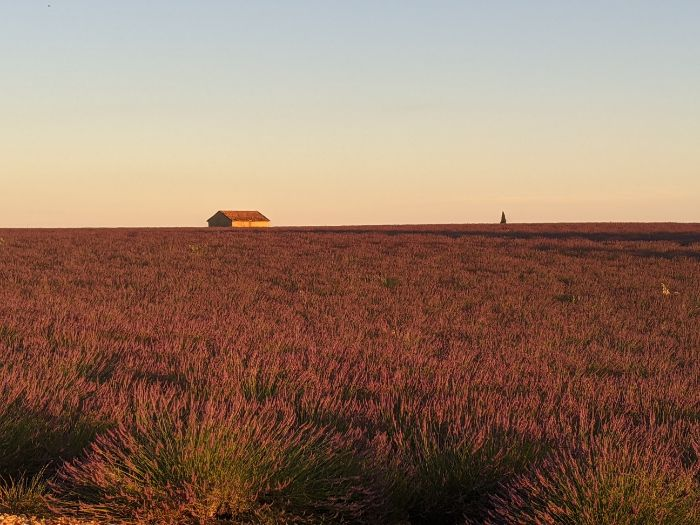 lavender field with single house | Lou Messugo