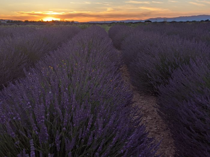 lavender fields at sunset | Lou Messugo