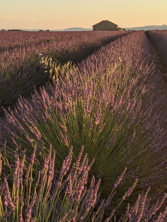 lavender on Valensol plateau | Lou Messugo